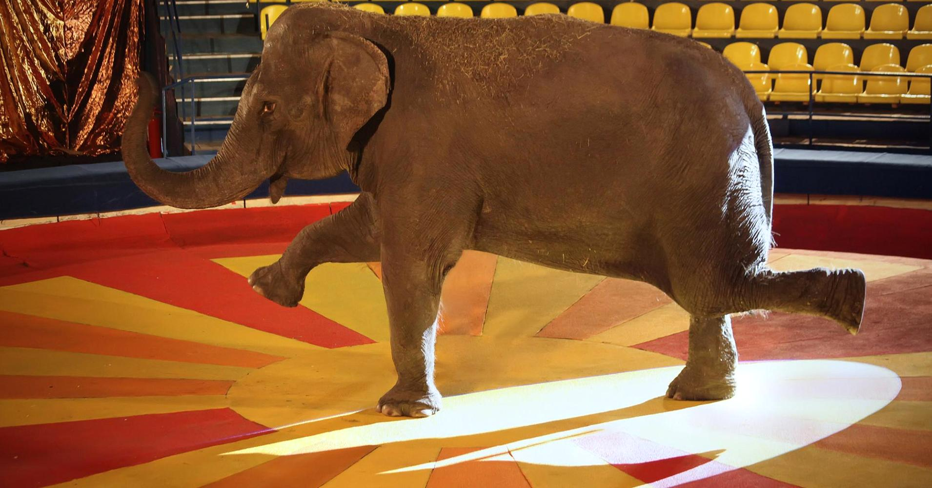 It 39 S Time We Address The Elephant In The Room At Every Health Care Conference Fan