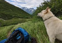 Husky saves deaf hiker on Alaska trail; others say he saved them, too