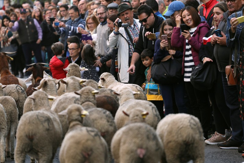 People watch a flock of sheep walk by during the annual sheep parade through Madrid