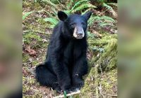 Bear killed in Oregon after officials say it became too friendly