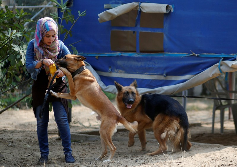 Palestinian woman Talya Thabet teaches a dog obedience commands in the central Gaza Strip