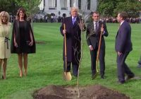 White House mystery solved: Where is Macron's gifted oak tree?