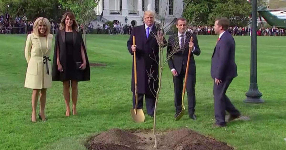 White House mystery solved: Where is Macron's gifted oak