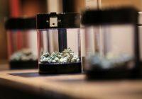 Sober start as recreational marijuana becomes legal in Canada