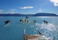 Sled dogs slog through meltwater on Greenland ice sheet